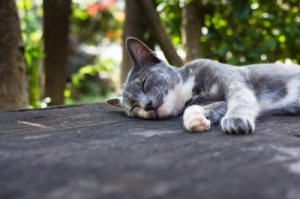 This kitty has the right idea. Sleep is essential in the days before a marathon. (Image courtesy of patpitchaya / FreeDigitalPhotos.net)