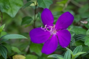 This is a Princess Flower. I did not have a picture of Princess Leia to put next to her quote, so this lovely purple flower shall be her stand-in. (Image courtesy of arztsamui / FreeDigitalPhotos.net)