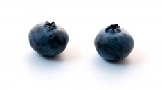A pair of blueberries. (Image courtesy of Ambro / FreeDigitalPhotos.net)