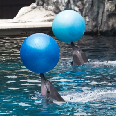 These dolphins appear to be having far more fun in the water than I ever do. I shall channel my inner dolphin this week and see if that helps me enjoy being in the pool a little bit more. (Image courtesy of tiverylucky / FreeDigitalPhotos.net)