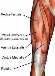 You lazy bum, you quadriceps muscles, you. Gotta make 'em fire regularly...or you'll shut down and mess stuff up with that there patella you're attached to. (Thanks to floota.com for this illustration.)