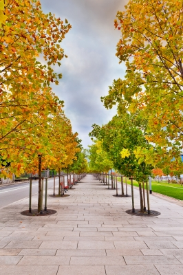 Ah, a tree-lined street. It all looks so innocent, doesn't it? Add in some fallen tree branches from a windstorm and, well, things get dicey. Read on. (Image courtesy of Serge Bertasius Photography at FreeDigitalPhotos.net)